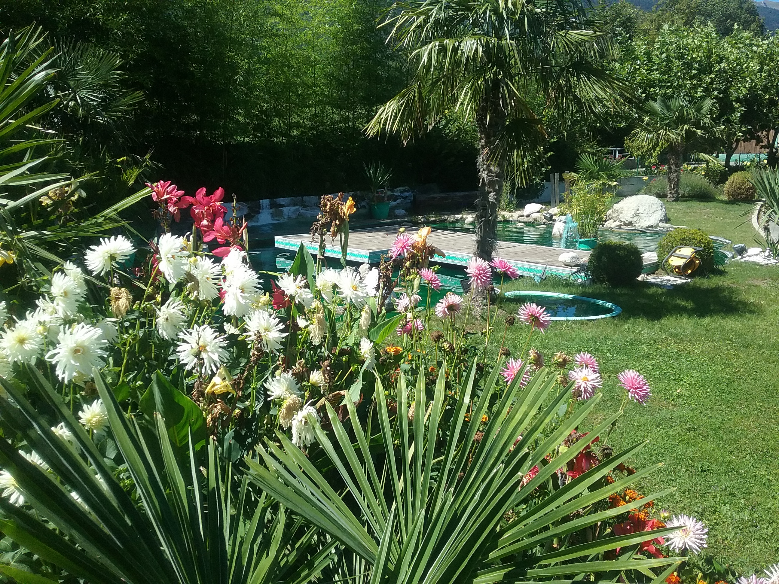 fleurs et bassin, aménagements paysagés